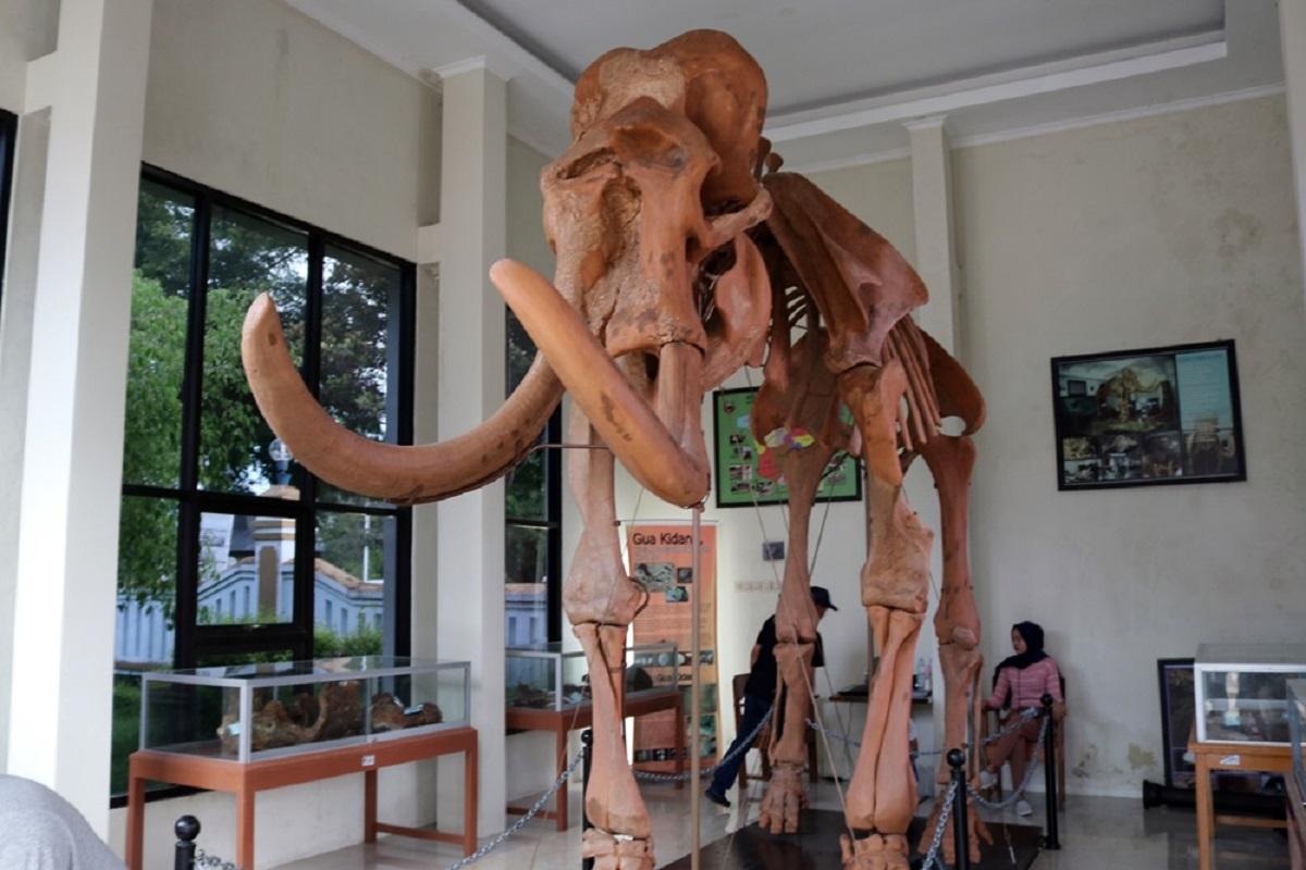 Replika Fosil Gajah Purba Blora Bisa Dikunjungi Setiap Hari